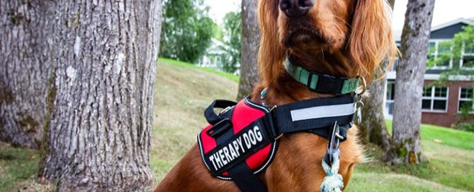 Therapy dog sitting on a grassy lawn among trees
